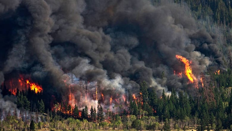 bc-forest-fire
